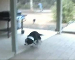 Happy Dog Goes Absolutely Crazy When He Reunites With His Best Friend