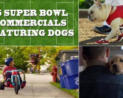 [Video] 15 Super Bowl Commercials Featuring Dogs And Puppies