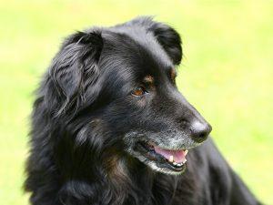 dog-1210560_1280