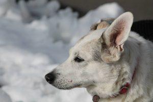 dog-1755756_1280