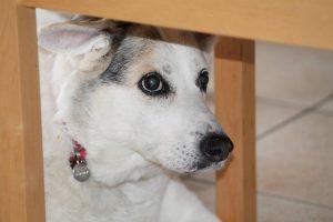 dog-1766834_1280