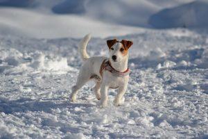 dog-716684_960_720
