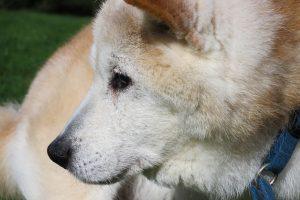 old-dog-1292304_1280