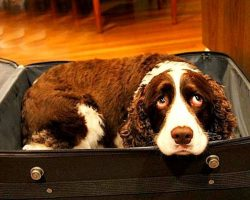Hospital doesn't allow pets – Man sneaks dog into hospital in suitcase to say bye to dying wife