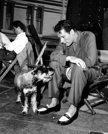 Errol Flynn dog