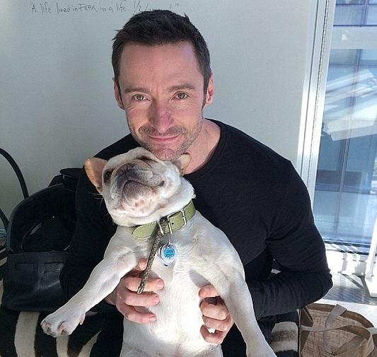 Hugh Jackman dog