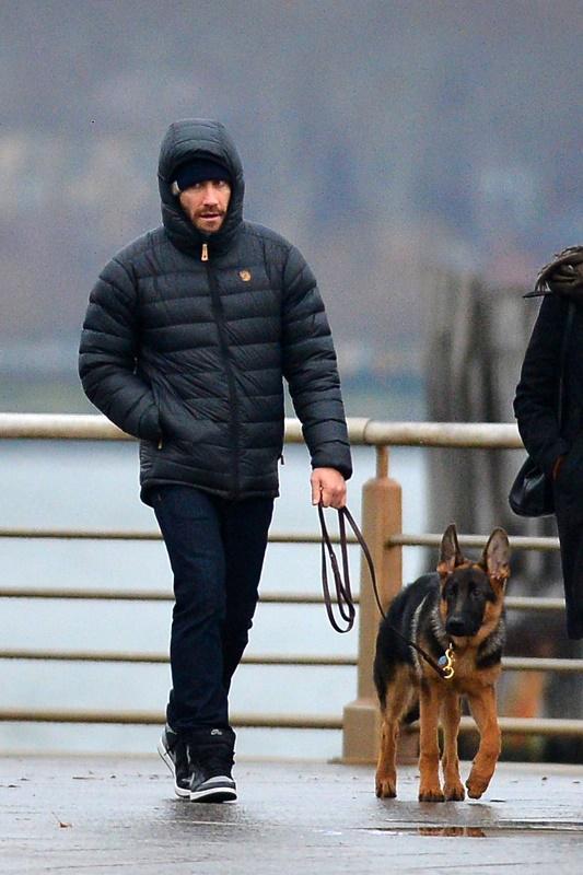 Jake Gyllenhaal dog GSD