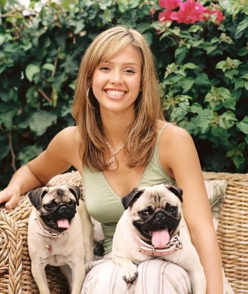 Jessica Alba dogs