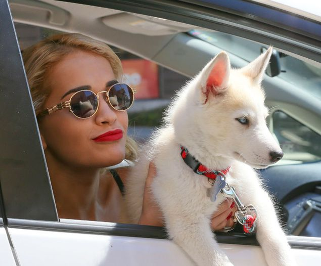 Rita Ora with husky