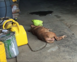This dog's been chained to this wall for 8 years. Now watch as rescuers approach…