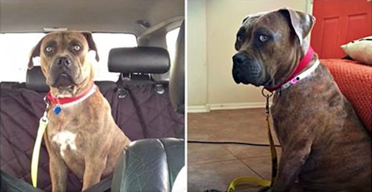 Her Humans Dumped Her At A Shelter For Getting Too Big
