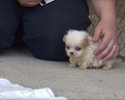 Rescue puppy is inseparable from his kitty best friend. Watch how cute they are together!