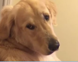 Dog Frowns At His Owner But Then Does The Goofiest Thing