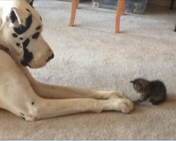 15 dogs and cats that will make you question everything you know
