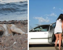 Lonely dog on beach is desperate for human companionship. Then she lures him into her car