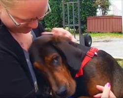 Chained and Neglected Dog Finds Love in a Forever Home