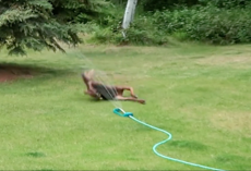 Baby moose caught playing in sprinkler in family's backyard