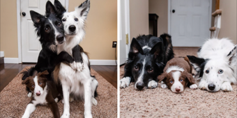 Famous 'Hugging Dogs' Have A New Family Member, And They Are Teaching Him To Hug