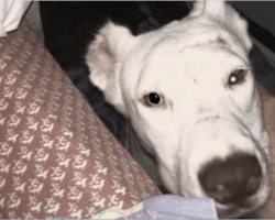 Rescue Dog Wakes Mom Up To Thank Her In Her Own Sweet Way