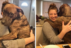 Dog Rescued 1 Year Ago Still Continues To Hug His New Mom Every Day She Comes Back Home