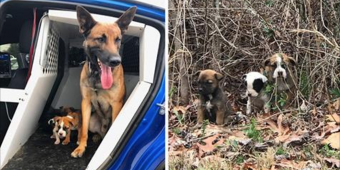 K9 and partner spot 3 abandoned puppies. K9 saves them and comforts them on ride home