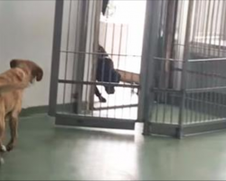 Dog was adopted 4 yrs ago. Now watch as an old friend walks through the door