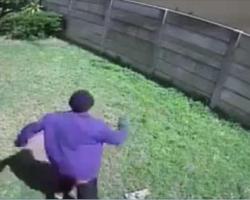 Hidden camera captures burglar entering through backyard. Now watch dog scare him off