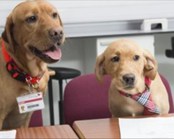 Nervous students interview for vet program, are shocked to see dogs as their interviewers
