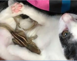 He rescues four baby squirrels in need of help, doesn't expect his cat to fall in love with them