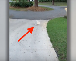 Dad notices his pup struggling with something at the end of the driveway