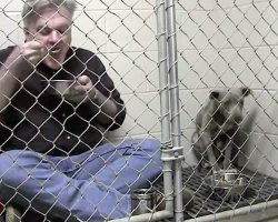He Locks Himself In With A Battered Pit Bull. Now Watch When He Starts To Eat.