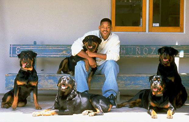 Will Smith rottweilers