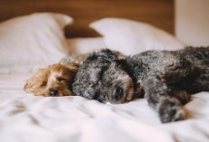 Do Dogs Dream? Here's What Scientists Think…