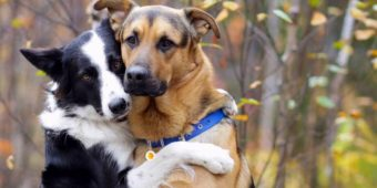Border Collie Does The Sweetest Thing When She Is Asked Who Her Best Friend Is