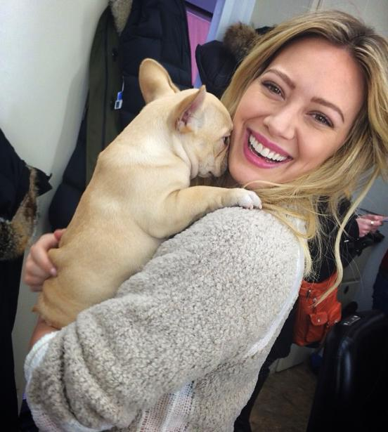 hilary duff french bulldog