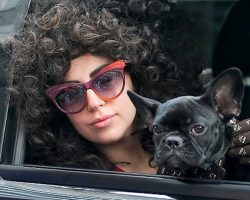 18 Celebrity French Bulldog Owners