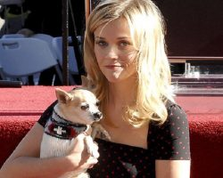18 Celebrity Chihuahua Owners