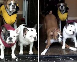 Dogs Hilariously Refuse to Go Out in Hailstorm, No Matter What Mom Does [Video]