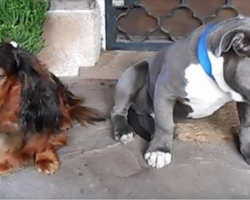 Owner confronts dogs about eating shoe – their reaction is hysterical