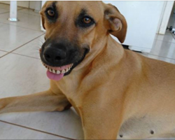 Owner notices dog's new smile, dies of laughter when he realizes what exactly happened