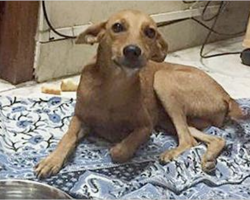 Dog thrown from roof found alive, still wagging her tail