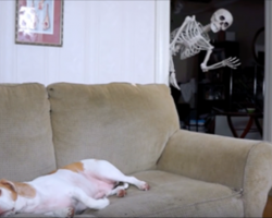 Dog's minding his own business when all of a sudden a skeleton appears