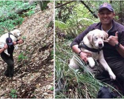 Blind dog is lost in the woods for 8 days. Then firefighter rescues her and refuses a reward