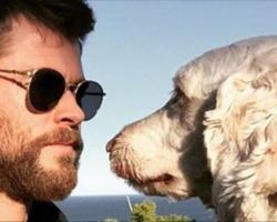 13 Celebrities Who Love Dogs!