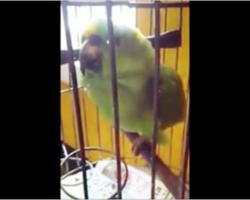 This parrot picked up a new trick after the newborn baby was brought home