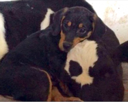 Puppy found in the woods forms bond with the most unlikely partner