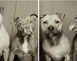 These Dogs' Owners Put Them In A Photo Booth For The First Time And The Pictures Are Priceless