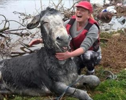 Rescuers save donkey drowning in flood. He can't help but grin after being rescued!