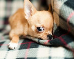 """15 Signs Your Dog Might Actually Be Your """"Baby"""""""