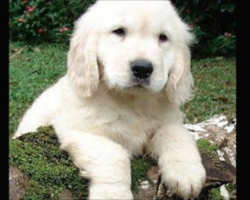 Man Told A Boy Not To Get The Disabled Puppy But Is Surprised By The Boy's Response